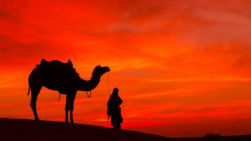 Man holding a camel