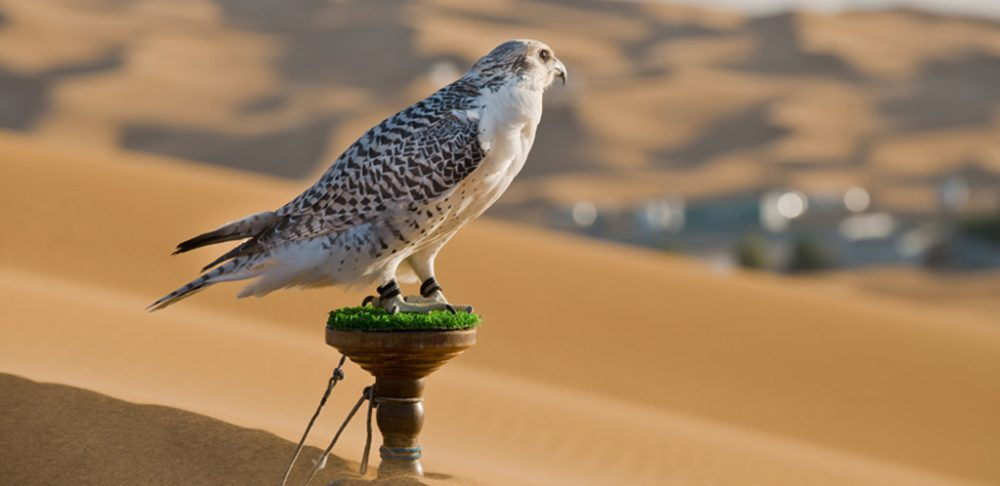 falcon standing on a wooden stand