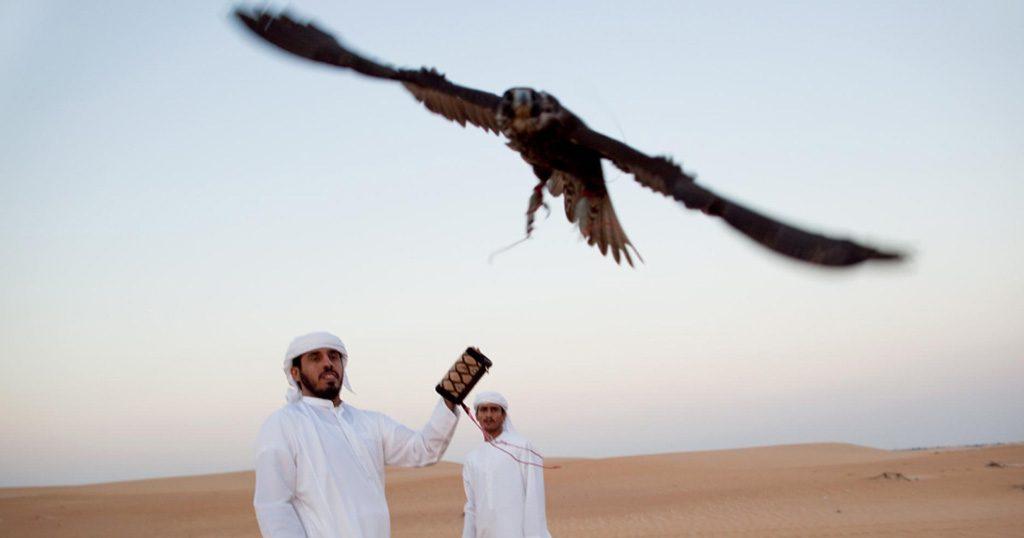 Falcon racing in Dubai.