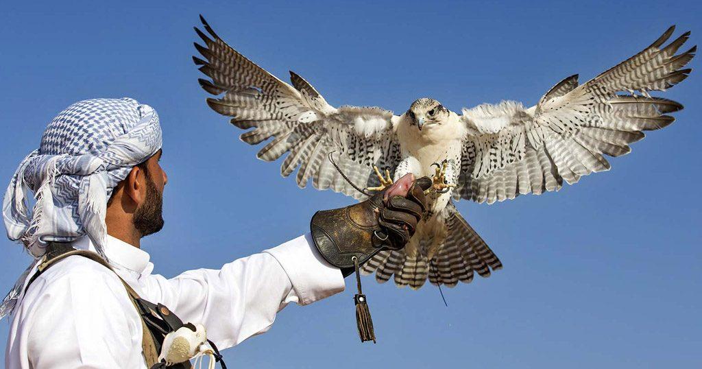 Training the falcon in Dubai
