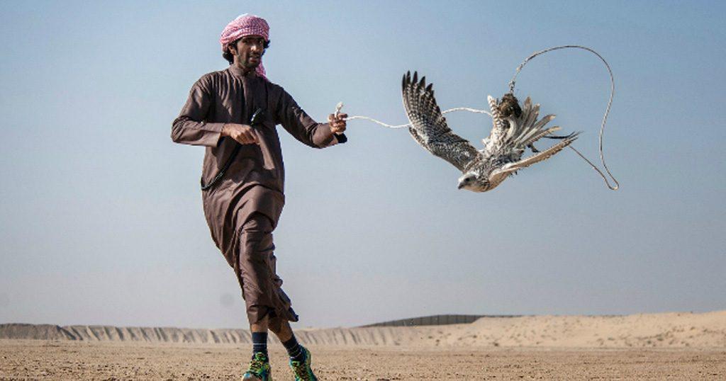 Shotgun falconry