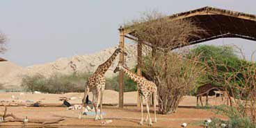 A Visit to the AL Ain Zoo